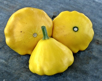 Yellow Scallop Summer Squash Heirloom Seeds Non-GMO Naturally Grown Open Pollinated Gardening