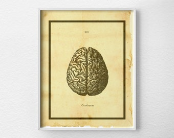 Anatomical Brain Print, Brain Anatomy Art Print, Anatomy Art, Anatomy Print, Brain Illustration, Medical Art, Scientific Brain Print, 0430