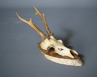 MOUNTED DEER ANTLERS 1955, Six Point, Wood Mounted Antlers, Switzerland, Mounted Deer Skull, Swiss Rustic Modern, Modern Rustic Decor