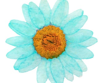 Pressed flowers, turquoise marguerite 20pcs for floral art, craft, card making, jewellery making, scrapbooking