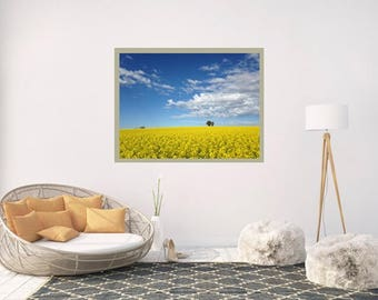 Fields of Gold.  Canola Field Photography.  Central West NSW