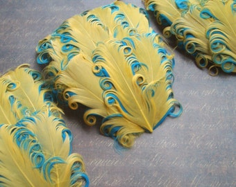 SET OF 5- Gold on Aqua Curled Goose Feather Pads