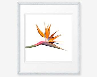Flower Download, Bird of Paradise, Flower Wall Art, Flower Wall Decor, Bird of Paradise Print, Bird of Paradise Photograph,Flower Photograph