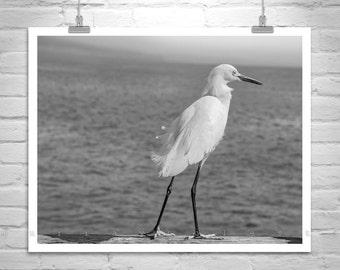 White Egret, Sea Bird Wall Art, Black and White, Bird Art, Bird Print, Bird Photography, Canvas Art Print, Picture Gift, Gift for Birder