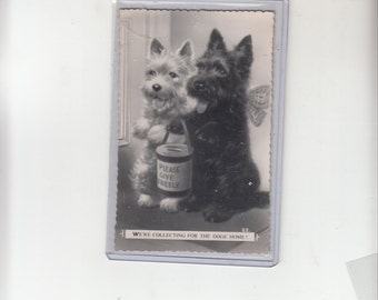 C1950 Two Enthusiastic Dog Terriers Out Collecting For The Dogs Home Postcard Musst See Animal Rescue