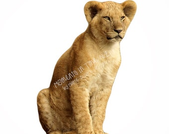 Moments In Time Lion Cub Animal Overlay