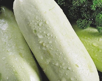 Squash Zucchini seeds Gribovsky Organic Heirloom Vegetable Seed from Ukraine #483