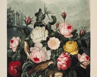 Rose art print vintage flower art print Botanical Art Prints Home Decor Wall art flower Victorian art Garden Wall Art French prints