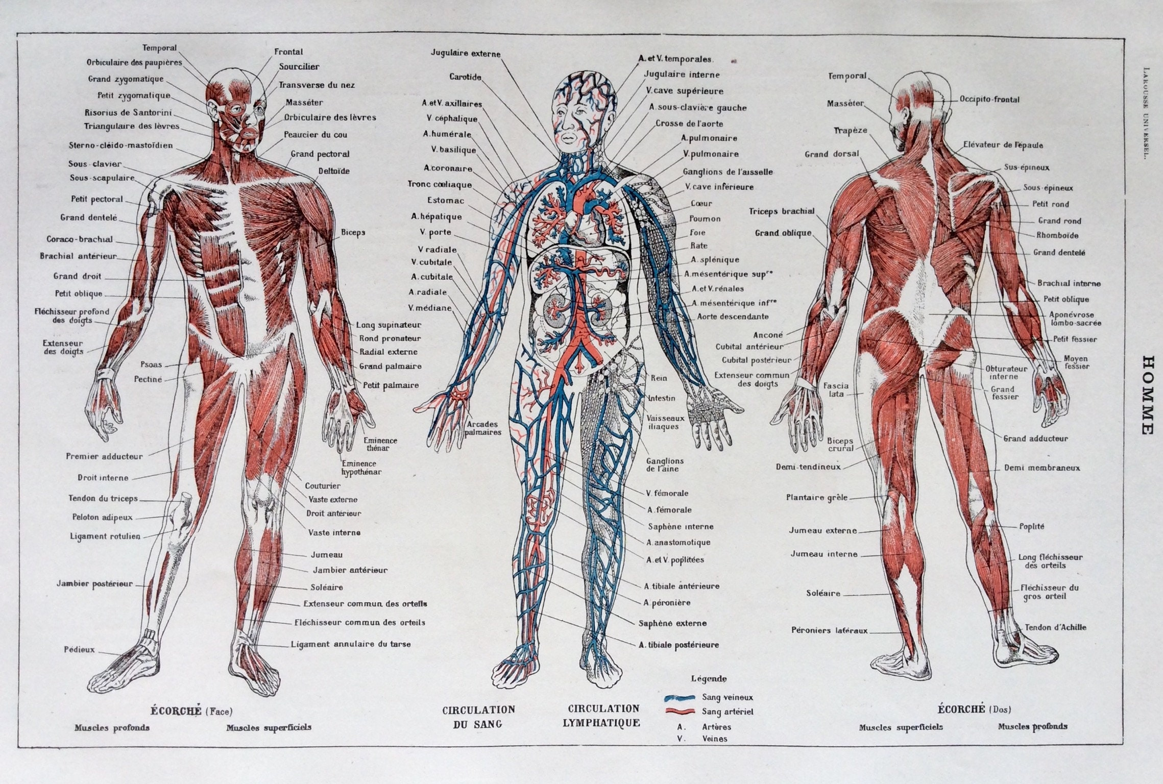 Atemberaubend Msc In Der Menschlichen Anatomie Bilder - Menschliche ...