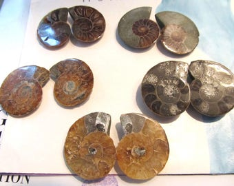 Ancient Spiral Ocean Fossil, Ammonite Cabs, Split Pair, Sea Fossil Cabachons, Matched Pair, 1 Pair 0524