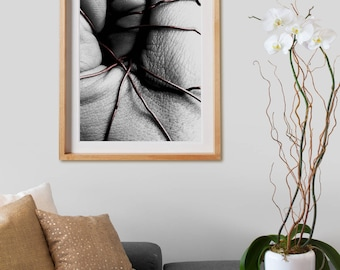 Pressures Series Print 003.  Black and White Photography, colored, decor, wall art, artwork, large format photo.