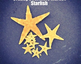 Starfish~ Hermit Crab Food