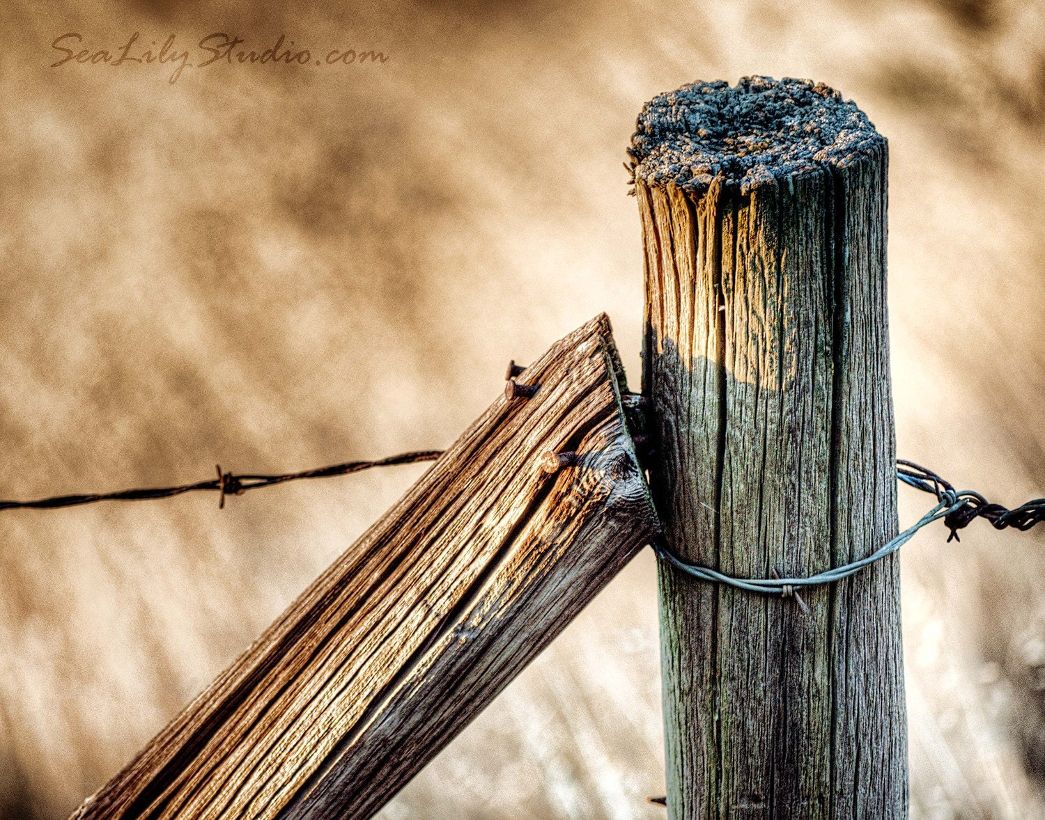 Fence Post : rustic photography wood rusty nail barbed wire