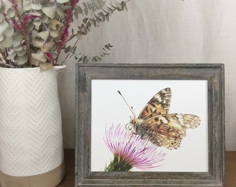 Painted Lady Butterfly 8x10 Print