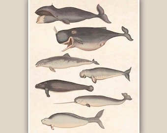 Marine Mammals Print, 10x8 Vintage illustrations,  Seashore art  Print, Coastal Living