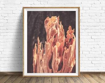 "nature photography, nature prints, large art, large wall art, instant download printable art, digital download, wood grain - ""Fire Wood"""