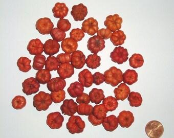 Putka Pods-Orange 2 lbs.