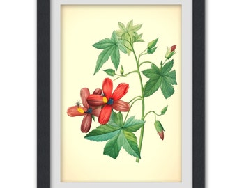 Vintage Botanical Print 58, produced from a antique book plate, 8x11 wall art.
