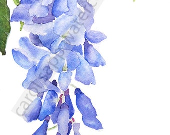 Wisteria watercolor-wisteria painting-wisteria art-fine art print-wisteria print-flower watercolor-flower painting-botanical watercolor