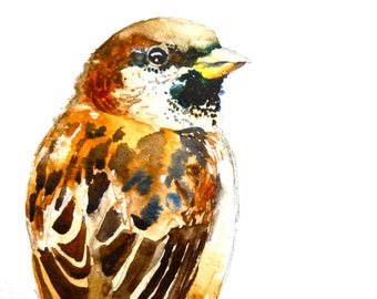 """Sparrow Watercolor, Giclee Print, 8""""x10"""""""
