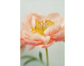 Coral Peony Print,  Flower Photography, Peony Wall Decor, Cottage Chic Decor, Floral Art Print, Flower Bedroom Art