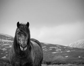 Black and white horse photo, winter decor, gray pony, animal photography, equine art, various sizes