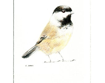 7 x 5 inch Chickadee Original Hand Drawn Colored Pencil Sketch