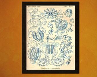 Vintage Sea Art Print 1904 - Vintage Home Decorating Office decoration Ocean Art Nautical Print Sea Life Marine Beach Artt