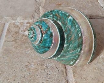 Turbo Shell -  Jade Turbo Shell - Natural Turbo - Polished Jade Seashell - Polished Jade Turbo - Pearlized Shell - No. 202