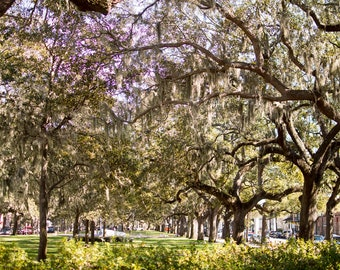 Trees in Savannah, Georgia with Spanish Moss Instant Digital Download Photo, Print at Home, Home Decor, Wall Art, Stock Photo, Printable