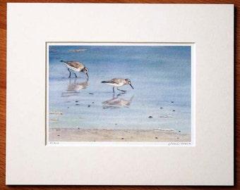 Sanderlings by the Seashore Matted Print