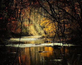 Dark Gothic Landscape Photograph, Autumn Woods Photo, Fine Art Nature Woodland Photography Print, Square Home Decor, Living Room Wall Art
