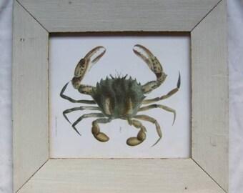 Coastal Crustacean Wildlife Print Reclaimed Wood Frame