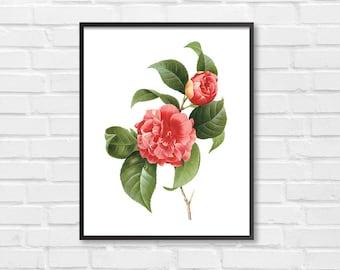 Red Camellia Floral Art Print / Botanical Print / Vintage Floral Clipart / Vintage Flower Illustration Print / DIY Flower Plant Print [08]