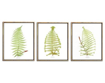 Botanical Illustration, Botanical Print Set, Fern Print, 3 Piece Wall Art Set, Triptych  Wall Art, Printable Art, Vintage, Antique, Prints