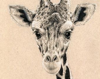 Mr. Giraffe With Bowtie Drawing Print of Original Artwork
