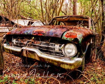 1961 Ford Falcon in the woods Photograph