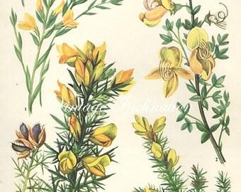 Vintage Botanical Print Antique FLOWERS, plant print botanical print, bookplate 19 art print, yellow plants plant wall