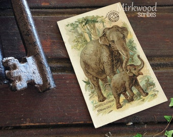 Arm & Hammer Cards  |  Interesting Animals #34 Asiatic Elephant Cow and Calf  |