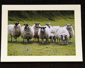 Greetings card: Are ewe looking at me?