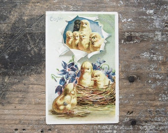 Antique Easter Postcard, Spring Decor, Vintage Ephemera, Collectibles, Nursery Decor, Baby Chicks Card, Raphael Tuck & Sons