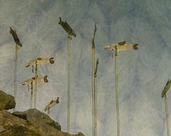Salmon Art & Waterfont Reflection Image,