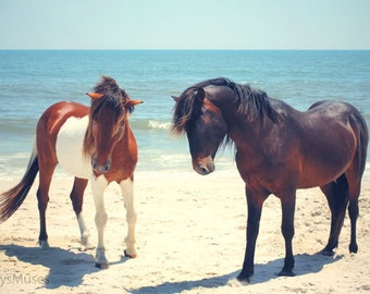 Horse Photography, Beach Photo with Assateague Ponies Pony, Tribal Home Decor, Blue  Seascape, Bohemian Ocean Boho