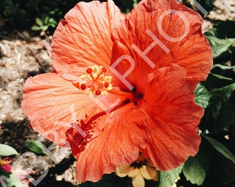Closeup Orange Flower, Nature Photography, Digital Download Photography, Digital File, Instant Download