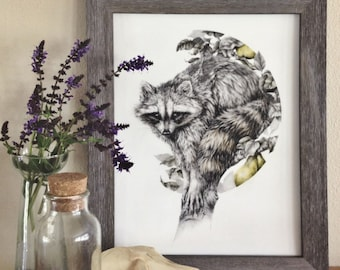 The Obscurer - 8x10 fine art print, raccoon woodland pencil drawing
