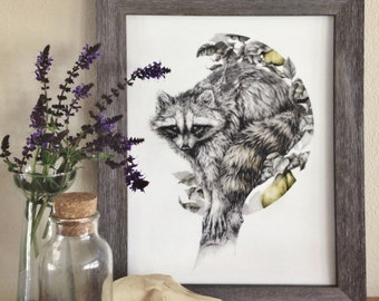 The Obscurer - 11x14 fine art print, raccoon woodland pencil drawing