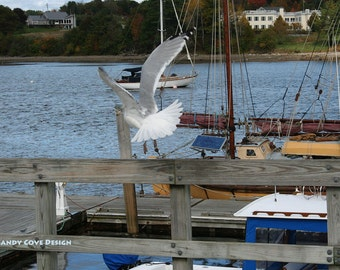 5 x 7 Greeting Card with Envelope - Belfast Takeoff, Seagull, Maine, Wildlife, Birds