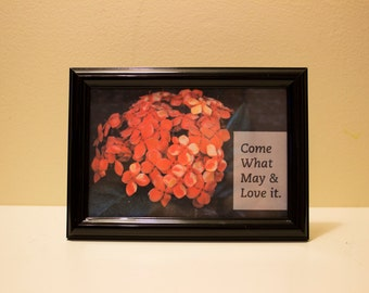 """Framed Flower Photo and Quote - """"Come What May & Love it"""""""