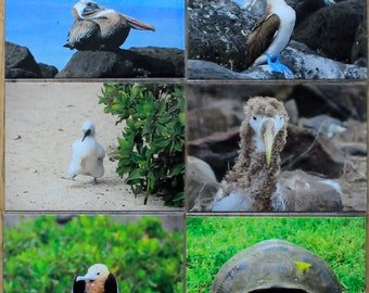 Galapagos Postcard Set - Postcards for Framing - Galapagos Boobies - Bird Art Print - Galapagos Art Print - Gifts for Birders
