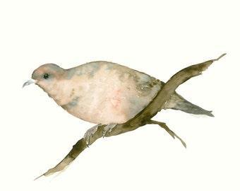 Fine Art Print from Original Bird Watercolor Dove